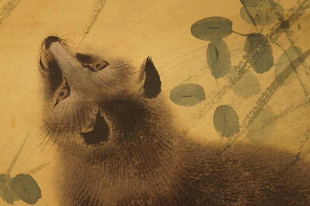 Waschbär - japanisches Rollgemälde (Kakejiku, Kakemono)